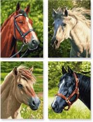 020-609340625 Pferde & Pony  Schipper Arts &
