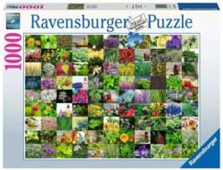 103-15991 99 Kräuter und Gewürze Ravensb
