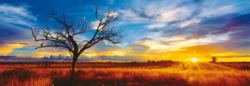 223-59287 Mark Gray: Desert Oak - Austra