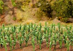 328-181250 Maispflanzen Faller Modellbau,